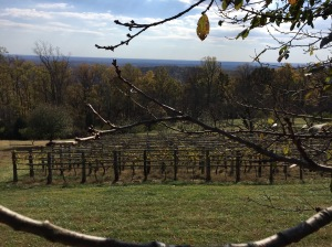 Monticello Vineyard